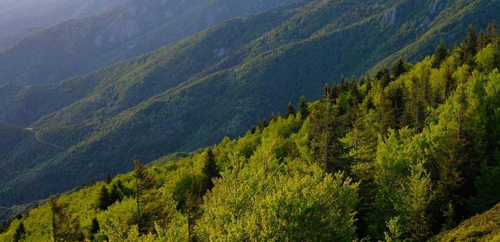 Les forêts à forte biodiversité