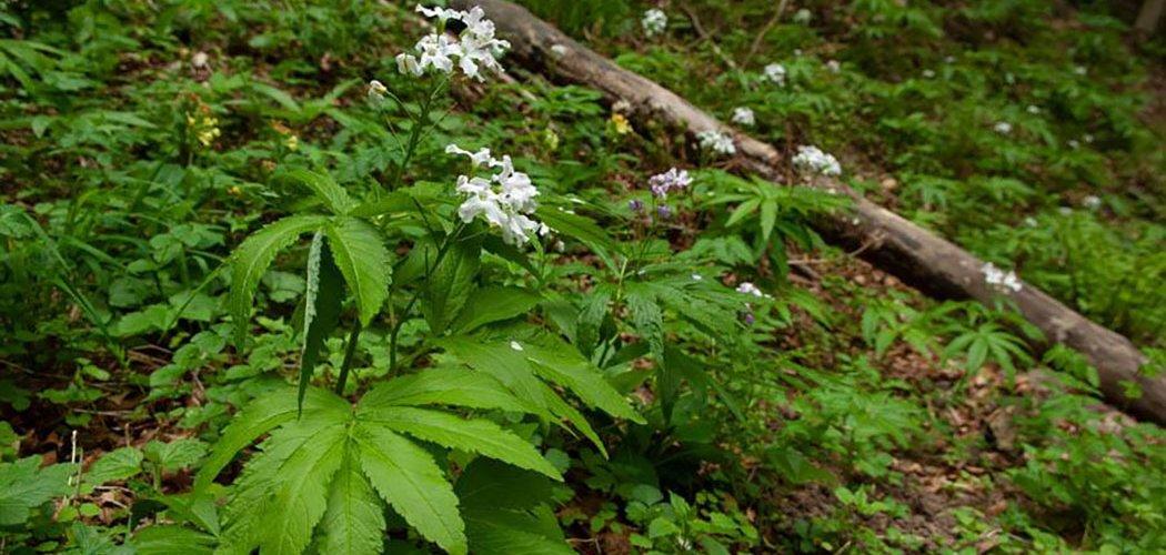 Un état des lieux de la flore sensible aux perturbations climatiques en Limousin