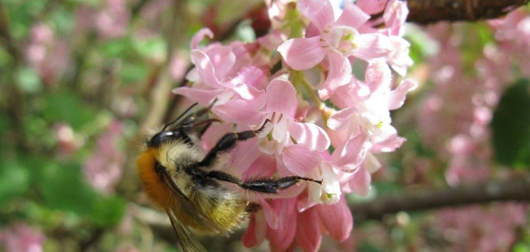Cartographier les potentialités d'accueil des abeilles sauvages en milieux naturels à semi-naturels
