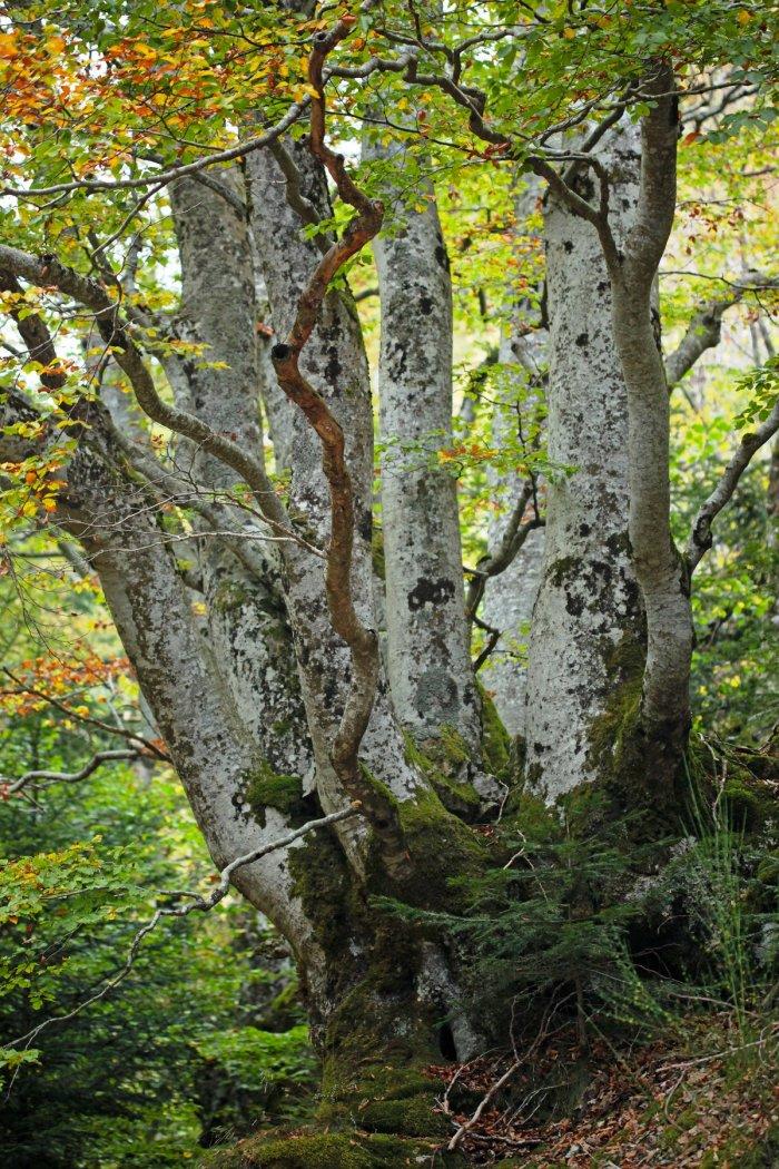 Promenons-nous dans les bois pendant qu'ils sont encore là...