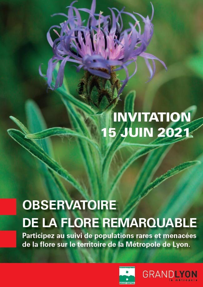 Participez au suivi de populations rares et menacées de la flore sur le territoire de la Métropole de Lyon