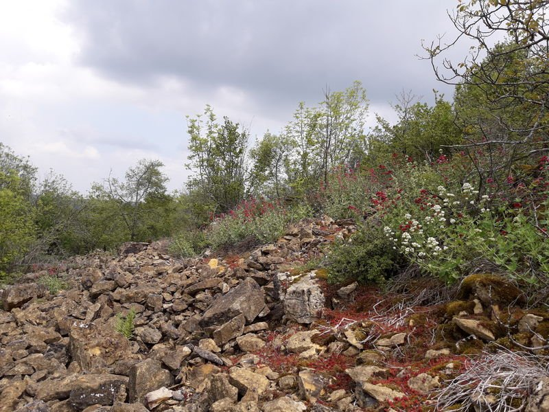 Les plantes sauvages des carrières de Glay et du bois des Oncins