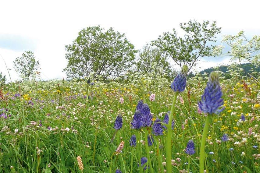 Aidez-nous à localiser les prairies fleuries du Devès et du Mézenc !