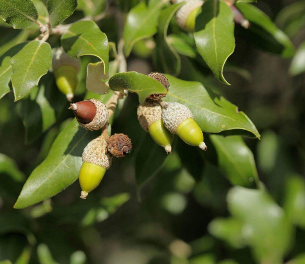 Wébinaire destiné aux producteurs / collecteurs de graines d'arbres et arbustes sauvages et locaux