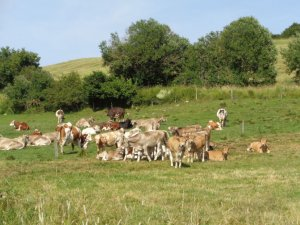 Connaître et gérer les prairies naturelles et leurs précieux atouts pour l'élevage