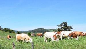 Connaitre et comprendre les prairies naturelles : un atout pour l'éleveur