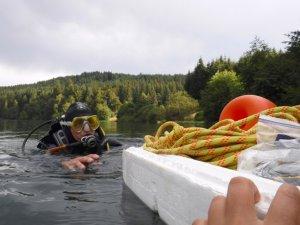 Plongez à la recherche de l'Isoète des Lacs