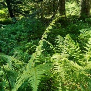 Réunion du réseau d'observateurs de la flore de l'Allier