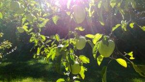 Le fruit des origines...