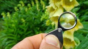 Réunion du réseau d'observateurs de la flore de la Loire