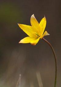 Découvrez la flore et la végétation de la haute vallée de la Loire