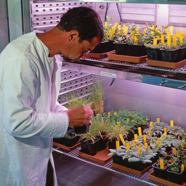 Conservation de la flore © L. OLIVIER / CBNMC