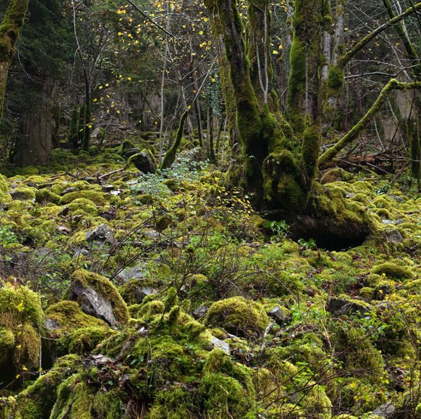 Gorges de la Rhue (Cantal) © S. PERERA / CBNMC