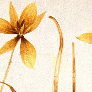 Herbiers