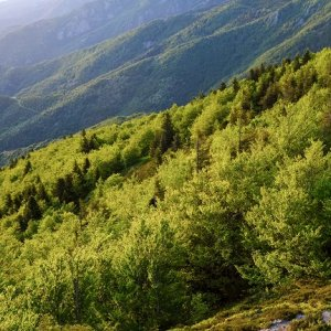 Forêts à forte biodiversité