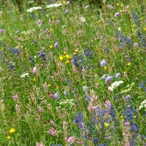 Prairies à flore diversifiée