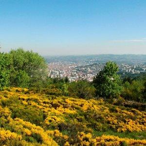 La flore et les végétations de la métropole stéphanoise sous l'œil attentif des botanistes du Conservatoire…