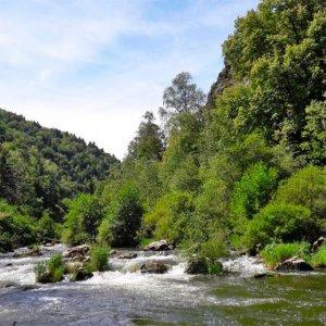 Suivi de la végétation des bords de l'Allier dans le cadre de l'aménagement du nouveau barrage de Poutès.