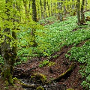 En Nouvelle-Aquitaine, les Conservatoires botaniques nationaux se mobilisent pour identifier les vieilles forêts...