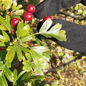 Lancement d'une enquête sur l'offre et la demande en végétaux locaux