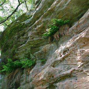 Flore et végétations remarquables du bassin gréseux de Brive-la-Gaillarde