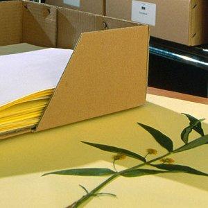 Numérisation des herbiers