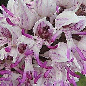 Le Quercy, Terre d'Orchidées