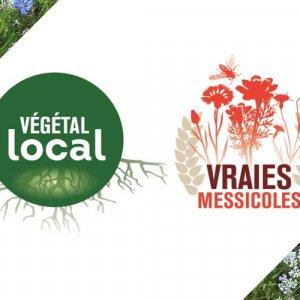 Webinaires Végétal local sur les herbacées